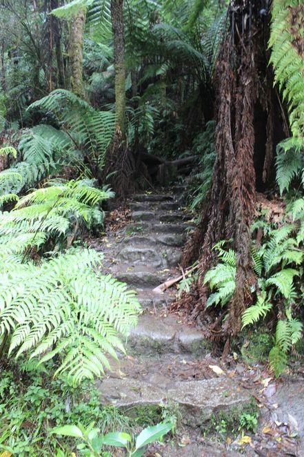 Tooronga & Amphitheatre Waterfalls - Melbourne