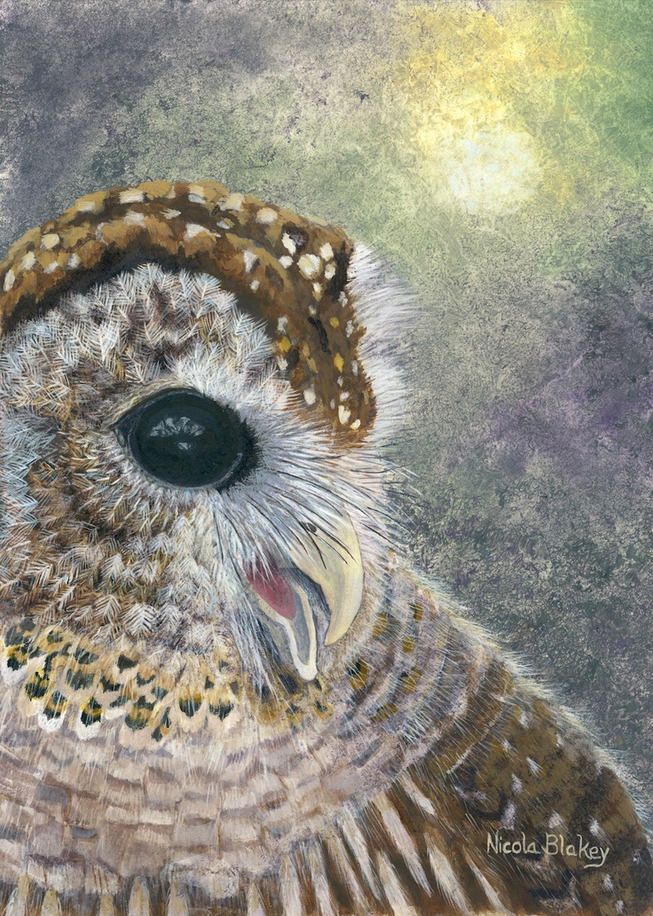 Barred Owl painted in acrylics.  Giclee prints available.