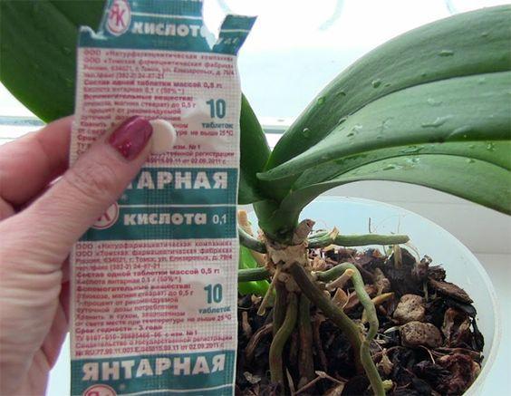 Я много читала о том, что янтарная кислота способна творить чудеса с растениями. Но проверить ее в деле как-то не было случая, пока не заболела моя орхидея. Так выглядела моя орхидея до обработки я…