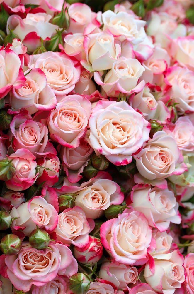 Roses - by Denys Kuvaiev
