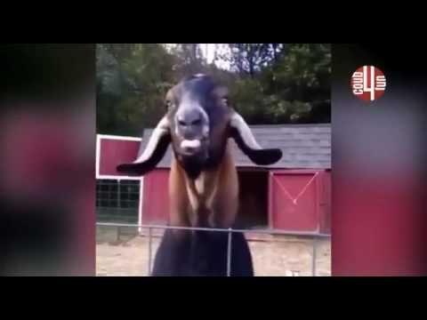 Самые смешные видео 7Все гениальное   просто