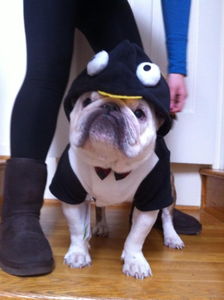 Our favorite Christmas Penguin!