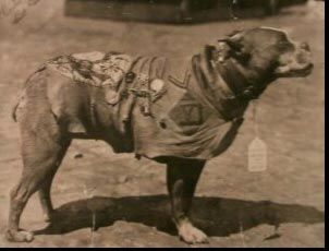 Sergeant Stubby-the most decorated dog in military history. He also happens to be a Pit Bull....the dog the media has stripped of all truths