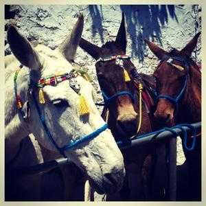 Donkey Ride From Old Port to Thira Town https://foursquare.com/andronisgroup/lists/created