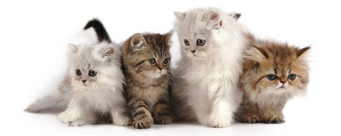 Kattennamen bedenken is niet moeilijk met deze lijst. Abygail: 4/5 Waardering (10 beoordelingen) Aisha: 4.2/5 Waardering (8 beoordelingen) Aiwa: 3.3/5 Waardering (12 beoordelingen) Akti: 5.0/5 Waardering (19 beoordelingen)