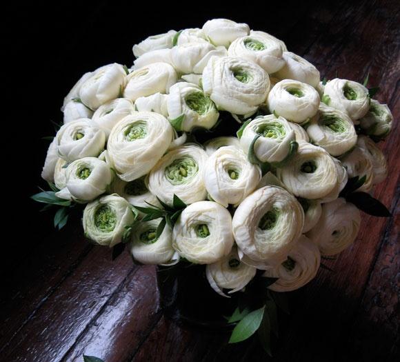 @Sara Gae  Waters: White Flowers, Favorite Floral, Floral Version, Flowers Projects, Flowers Ranunculus