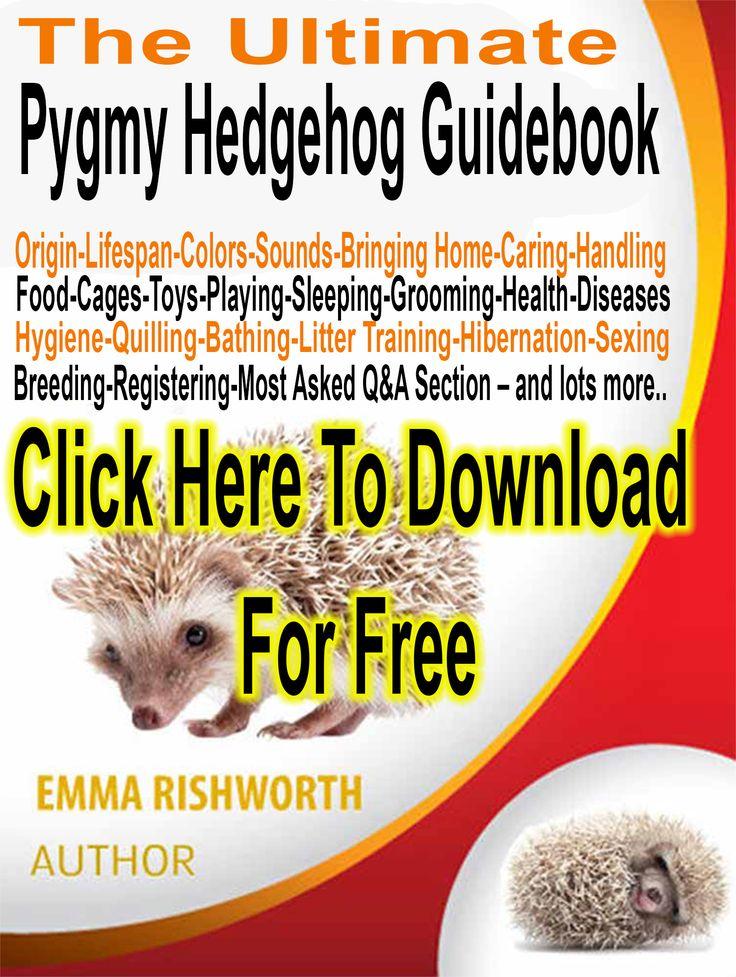 Pygmy Hedgehog For Sale   UK Hobby Breeder