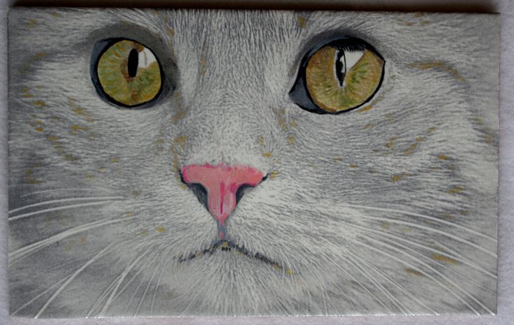 Yellow-green eyes cat engraved to ceramic tile 40x25cm