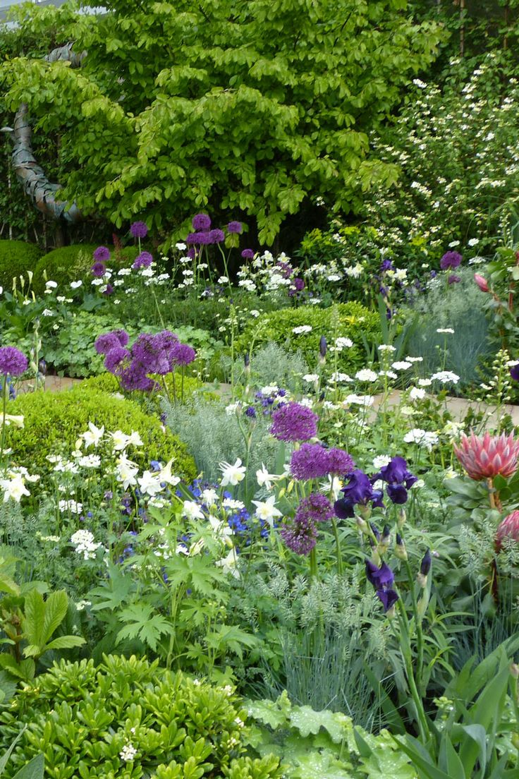 The Time In Between garden at the Chelsea Flower Show - alliums are great for height