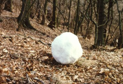 Andy Goldsworthy , Snowball made from last remaining patch of snow/left in the shadow of  a tall hedge, High Betham, Yorkshire, Cibachrome Photography