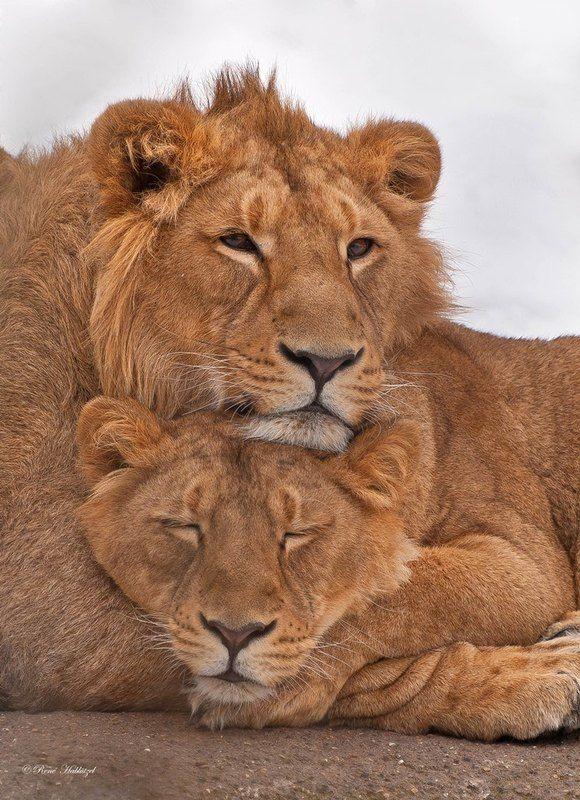 Картинки любовные с животными
