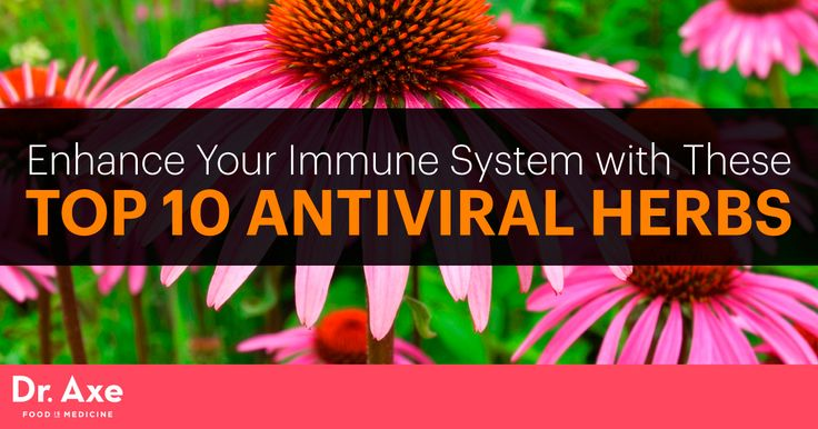 Antiviral herbs build your immune system and protect the body from viruses. Here are the top 10 antiviral herbs, along with benefits and healthy recipes.