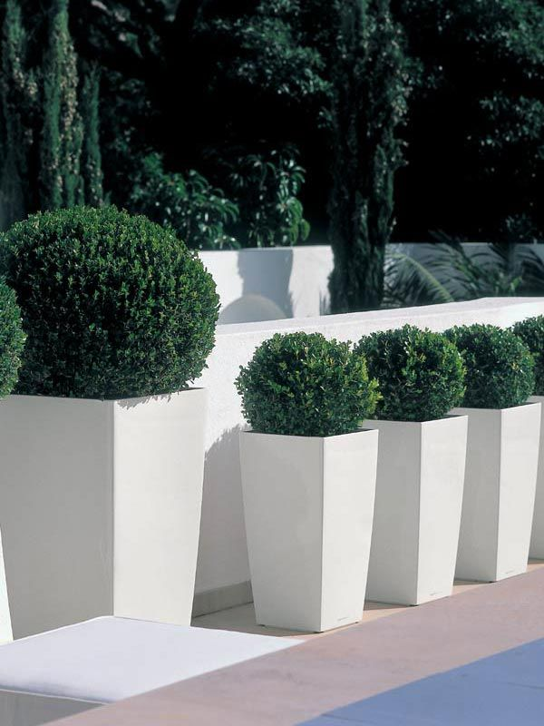 We sell a range of stylish Lechuza CUBICO Planters available in a range of sizes and colours. Click here for more images, information and to order today.