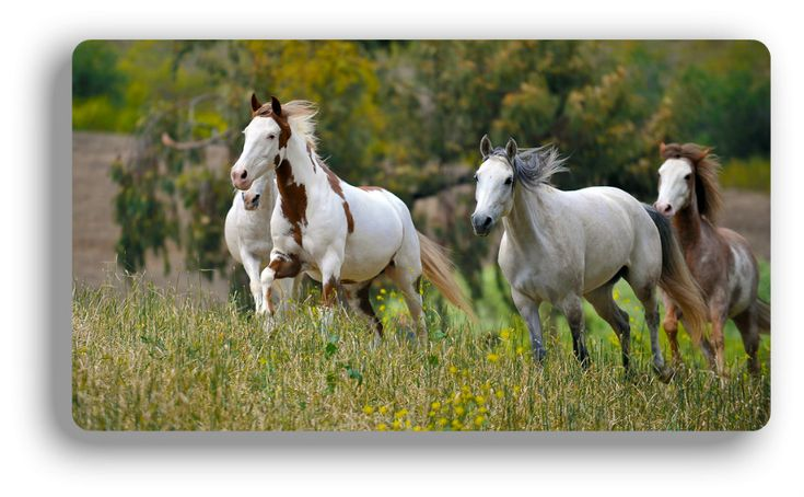 THE BLACK HILLS WILD HORSE SANCTUARY -- EDUCATIONAL FAMILY FUN