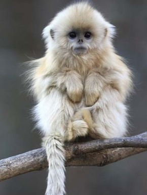 Cute monkey crawling in your window