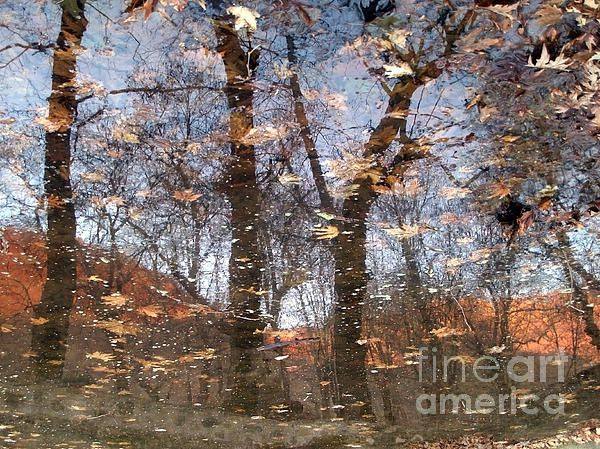 Enchanted forest. The photo is the reflection of the trees on the surface of a small lake that is full of fallen leaves