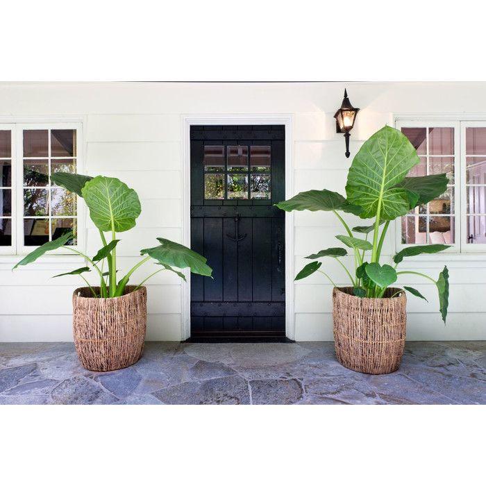 Kouboo Madras Storage Basket and Indoor Planter & Reviews | Wayfair