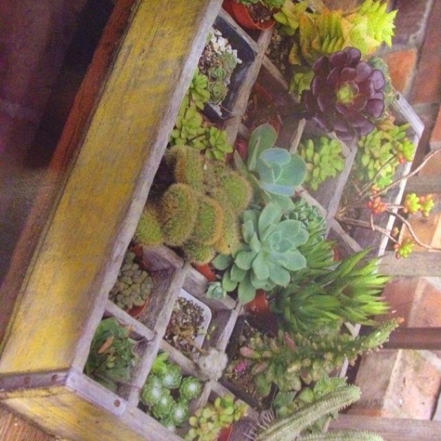 17 best succulent creations images on pinterest teacup gardening and cactus - Succulent container gardens debra lee baldwin ...