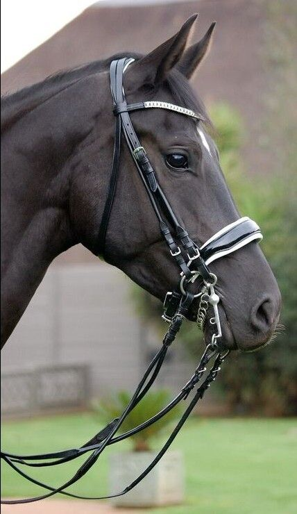 """Bling double bridle """"Azzi"""" from Novas Equestrian"""