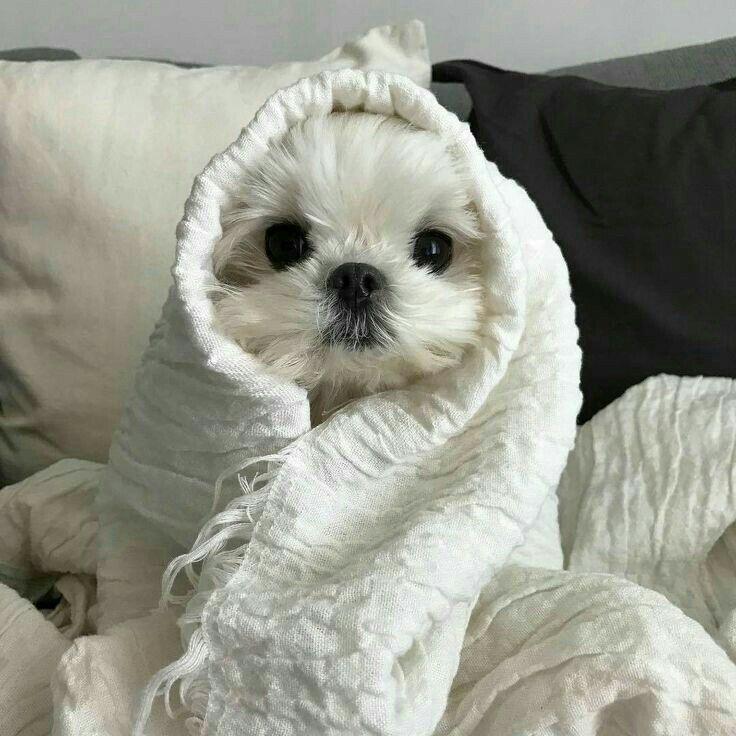 Animals おしゃれまとめの人気アイデア Pinterest Iae 子犬 画像 面白いペット 可愛すぎる動物