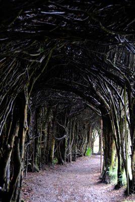 serpentine yew hedge-Trevarno, Cornwall