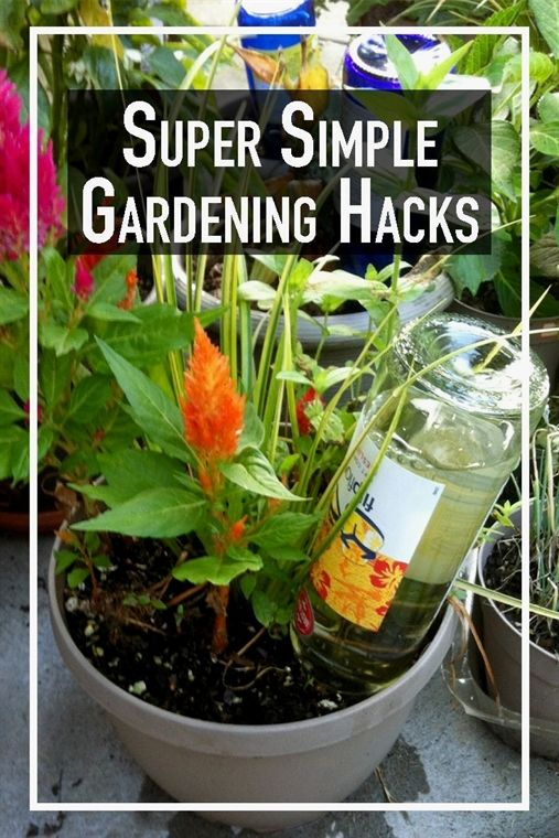BUZZNETSuper Simple Gardening Hacks