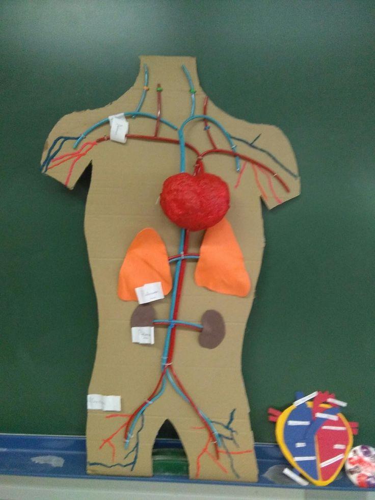Resultado de imagen para sistema circulatorio maqueta
