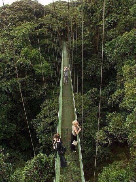 Canopy walkways above the Monteverde Rainforest, Costa Rica