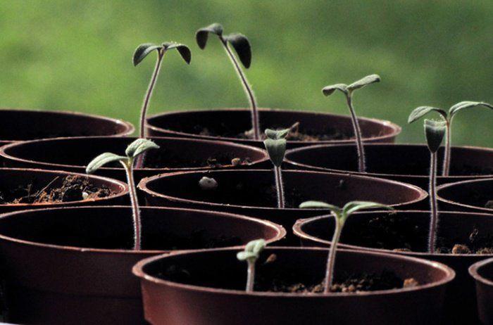 Si vous pensez que faire pousser vos propres légumes, c'est compliqué et que ça demande d'avoir un jardin, voici quelques trucs et astuces qui pourraient bien changer votre perceptio...