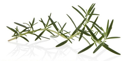 #ROSEMARY  A natural antiseptic with an invigorating effect on both body and mind, used for centuries to cleanse and condition hair.  Experience the benefits in #AVEDA's Rosemary Mint Shampoo and Conditioner, and Shampure Shampoo and Conditioner.
