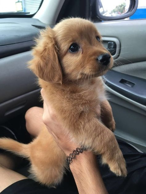This cutie braving her very first car ride. | 29 Puppies Who Are Far Too Cute For This World