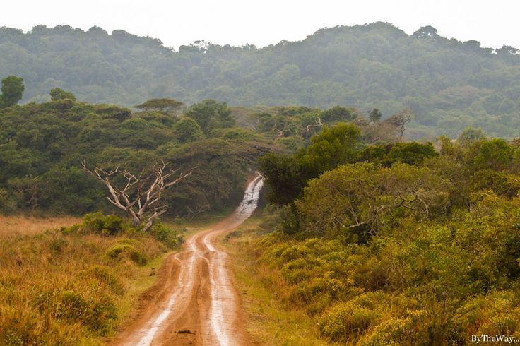 Dunes covered with subtropical forest near Cape Vidal in iSimangaliso Wetlands Park, KwaZulu Natal (South Africa)