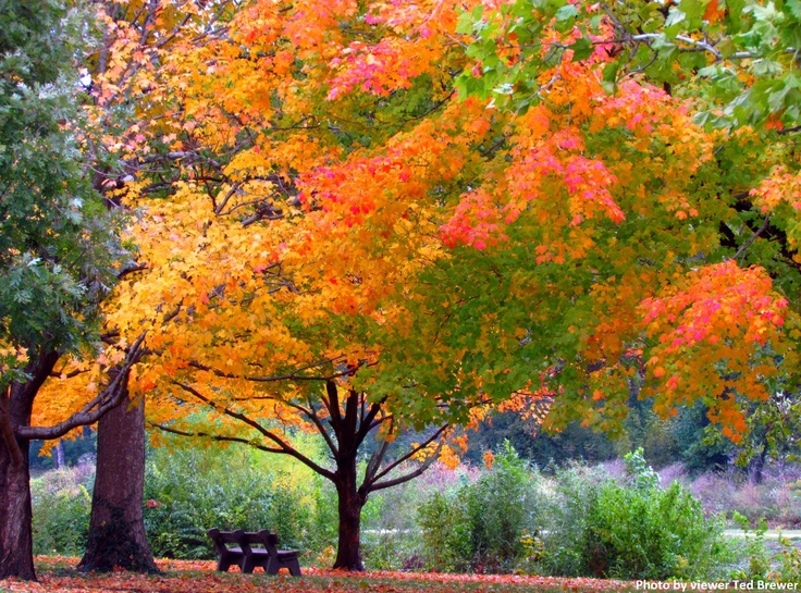 Washington Park, Springfield, Ill. Photo by viewer Ted Brewer.