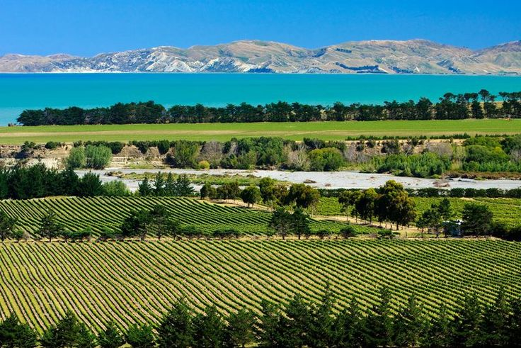 Northern South Island Vine Yard