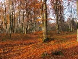 Avrig Valley, Romania