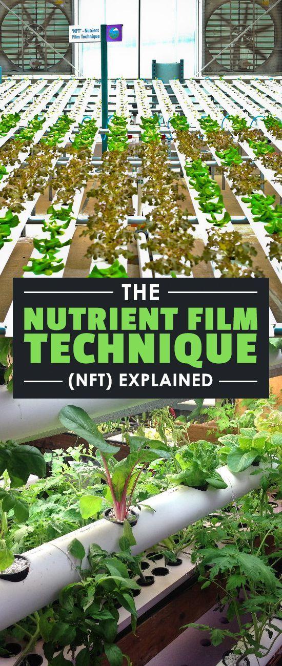 The Nutrient Film Technique Explained   Gardening & Livestock