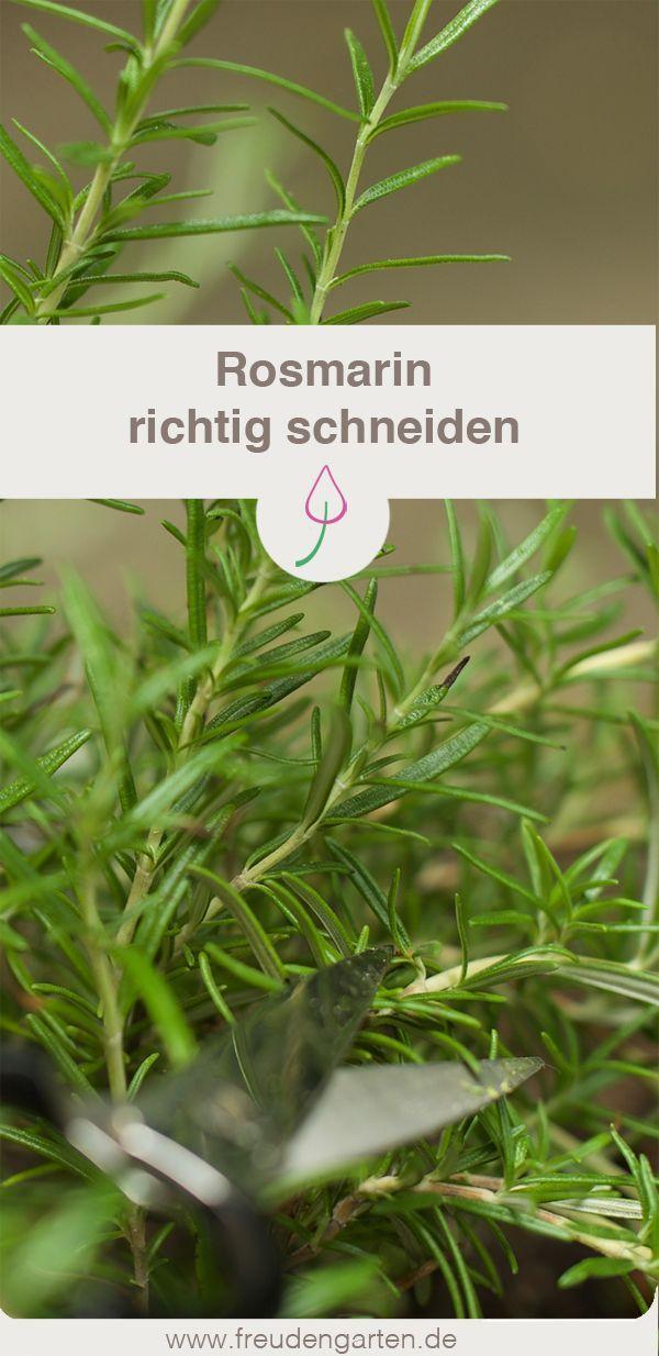 Rosmarin Schneiden Garten Ideen Tipps Rosmarin Pflanzen