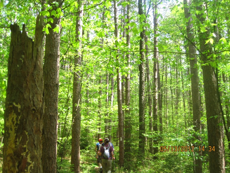 Marching into the forest--at Finger Lakes Trail, NY