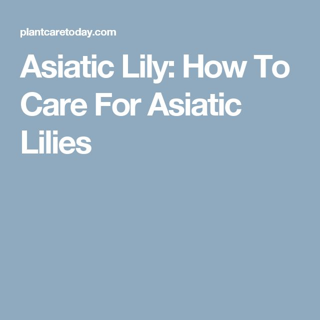 Asiatic Lily: How To Care For Asiatic Lilies