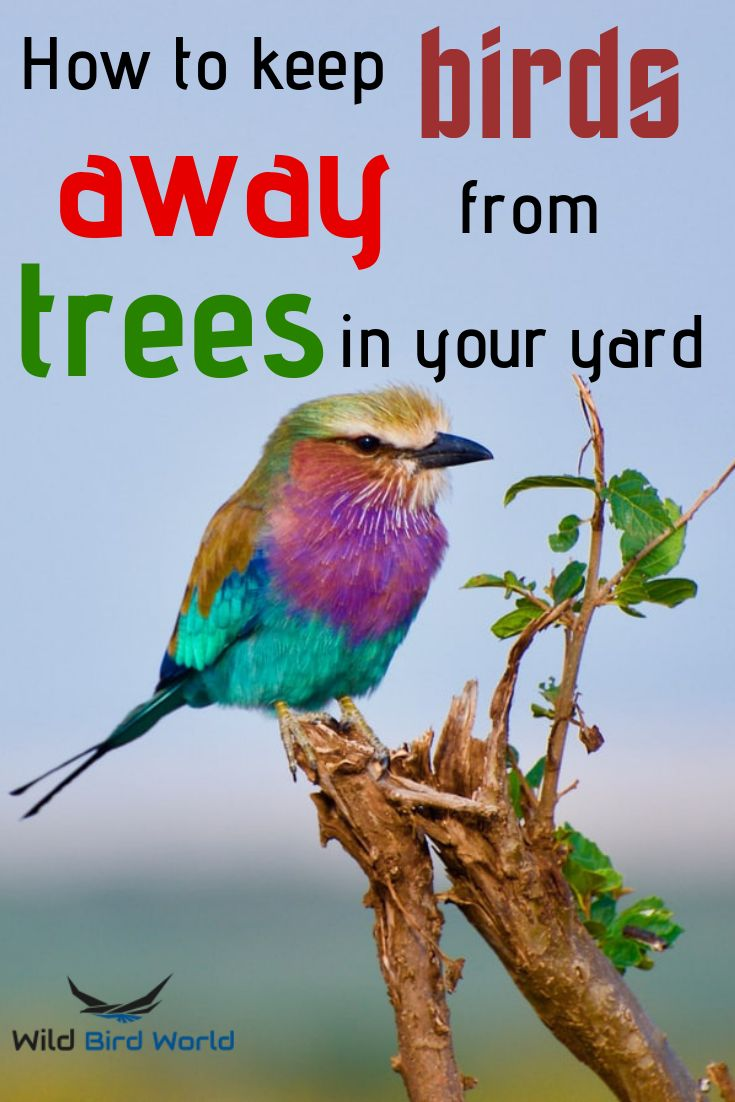 How to keep birds away from trees in your yard keep
