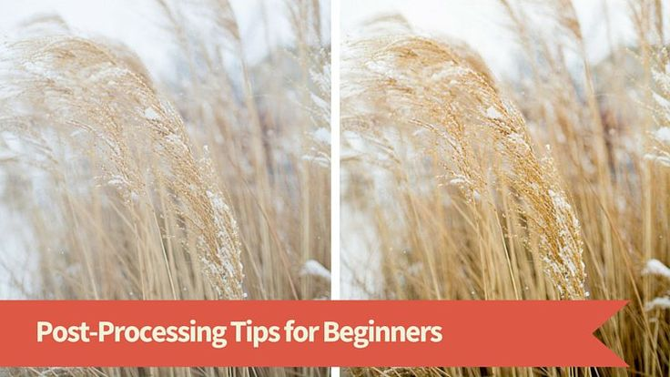 Post Processing Tips for Beginners