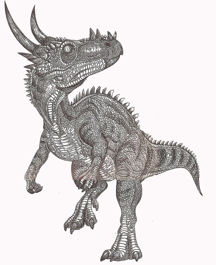 Dracorex - Facts and Pictures
