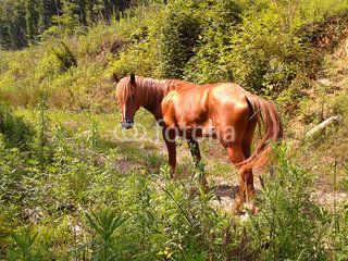 Red foal on a country forest road