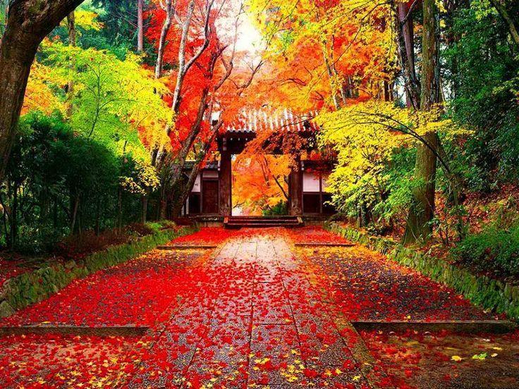 beautiful fall scene Japanese landscape, Landscape
