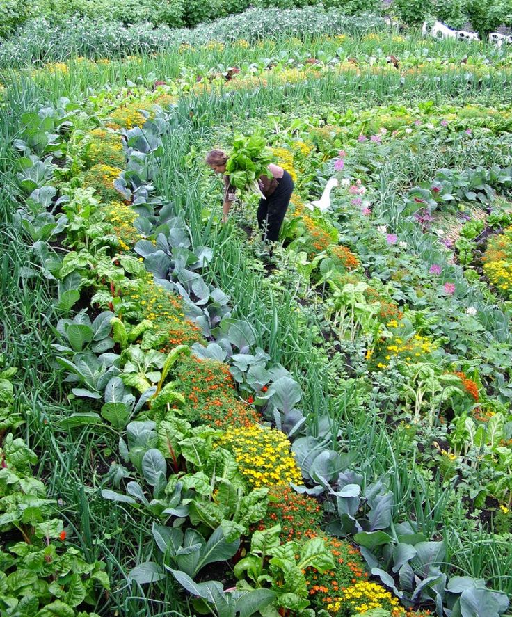 Beautiful edible landscaping with a rainbow garden bed (the Eden Project)
