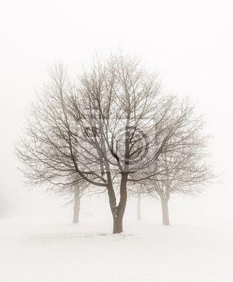 Zimní stromy v mlze na obrazech myloview. Nejlepší kvality fototapety, myloview sbírky, nálepky, obrazy, plakáty. Chcete si vyzdobit Váš domov? Pouze s myloview!