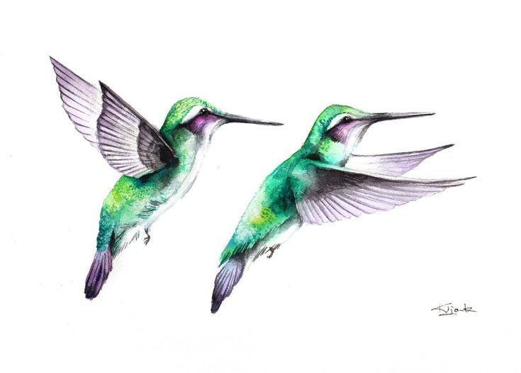 Buy Hummingbirds, wildlife, birds and nature watercolour, Watercolour by Karolina Kijak on Artfinder. Discover thousands of other original paintings, prints, sculptures and photography from independent artists.
