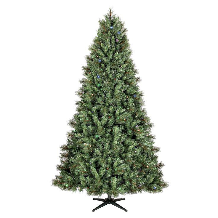 1000 Ideas About Balsam Fir Tree On Pinterest Balsam