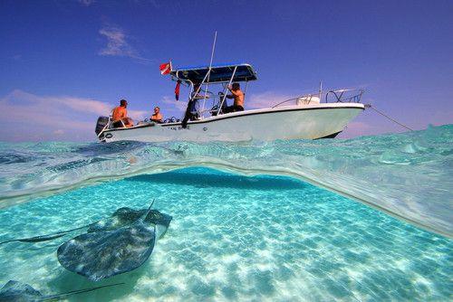 Best 25 deep sea fishing ideas on pinterest deep sea for Deep sea fishing tybee island