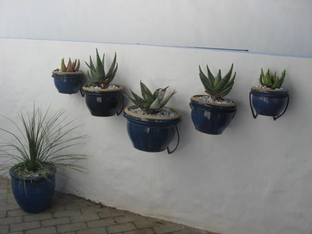Gardening by the sea http://westerncapetravels.weebly.com/